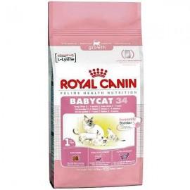 Royal Canin Babycat | Royal Canin BabyCat este o hrana special conceputa pentru pui de pisica cu varsta intre 1 si 4 luni.